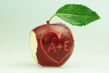 Apfel von Adam und Eva