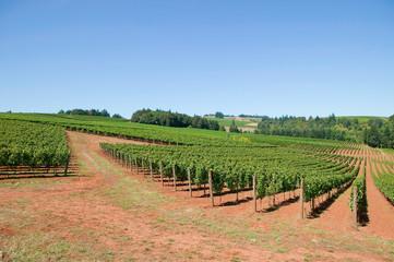 Winery_03