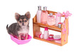 Spa accessories and cosmetics and Chihuahua puppy in bathtube