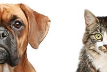 Psy i koty. pół kufy bliska portret
