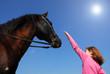cheval et enfant au soleil