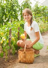 girl picking  green pepper