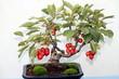 bonsai con frutti rossi