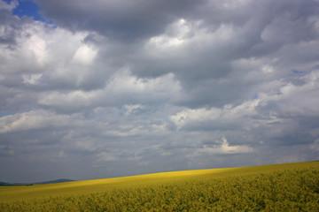 Rapsfeld im Wolkenzauber