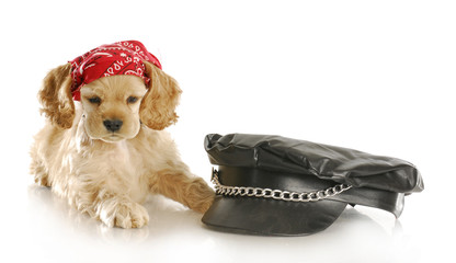 cute biker puppy