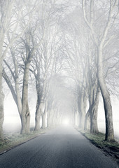 Allee | Nebel © lassedesignen