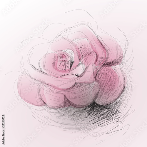 Rose flower / realistic sketch (not auto-traced) © Muamu