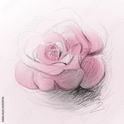 rose flower sketch. Rose flower / realistic sketch