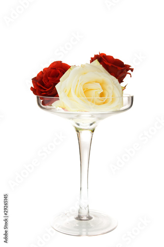 rose in glass bowl isolated on the white background