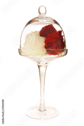 glass with rose flower on white background
