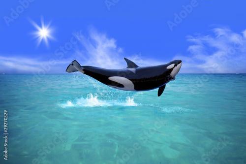 Deurstickers Dolfijn Killer Whale