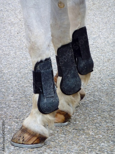 The legs of a horse with horseshoes