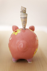 Rolled banknotes sticking out of piggy bank, back view