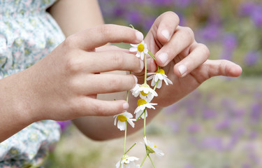 Pre-teen Girl Making Necklace of Flowers, close-up