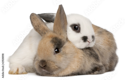 Two rabbits in front of white background