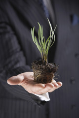 Businessman Holding a plant without pot, mid-section