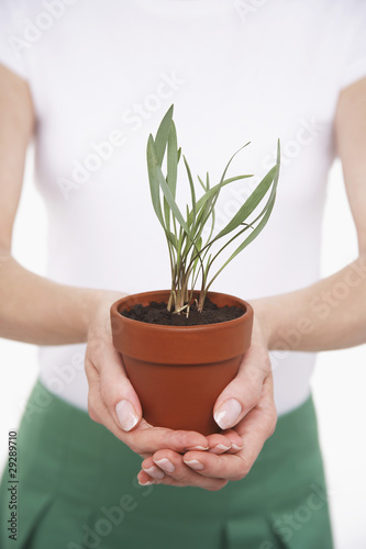 Woman Holding Potted Plant, mid section