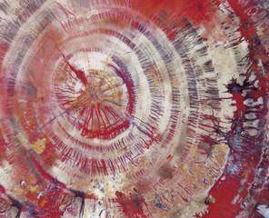 Petrified wood, close-up