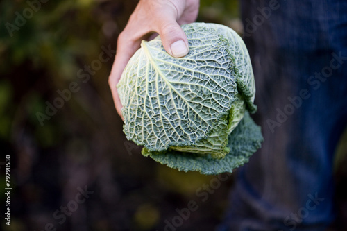 A man holding a cabbage