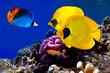 Underwater image of coral reef