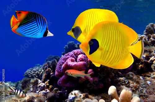 podwodny-obraz-rafy-koralowej,-ryby