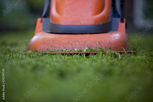 Cutting the grass with a lawnmower, close-up