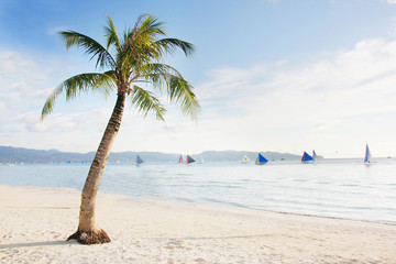 palm tree on sand beach