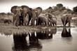 Fototapeten,tier,baby,elefant,familie
