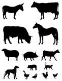 Fototapety Farm animals