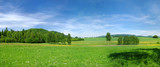 Fototapety Green meadow and blue sky during the spring