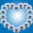 Heart from dandelions