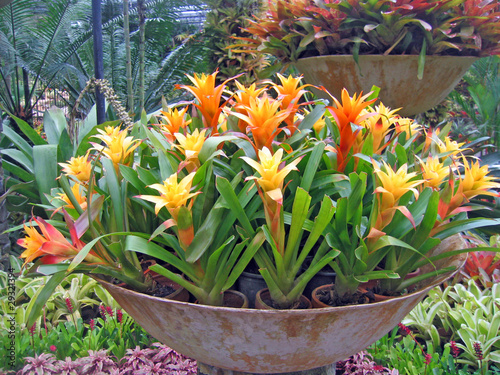 Rare tropical flowers and plants in a garden of orchids
