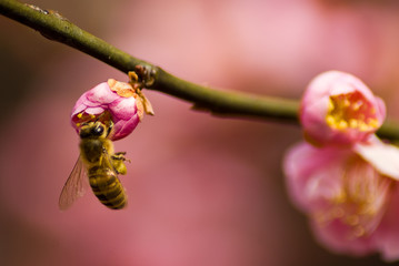Bee on Spring Tree