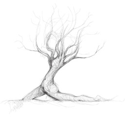 Tree like woman Daphne / realistic sketch (not auto-traced)