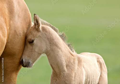 Horse and colt