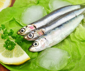 Salat, Fisch