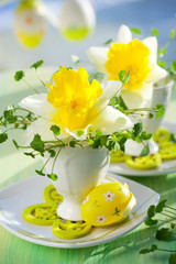 narcissus in eggcups