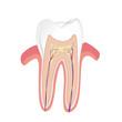 Vektor Zahn