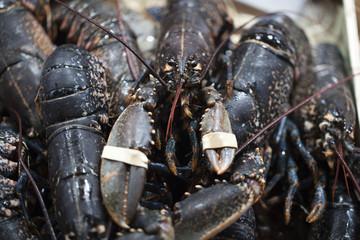 homards noirs bretons au marché