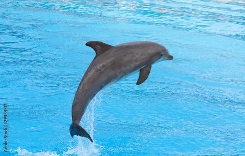 Fototapeta wodnych - Atlantyku - Wodny Ssak