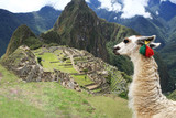Fototapety Llama at  Lost City of Machu Picchu - Peru