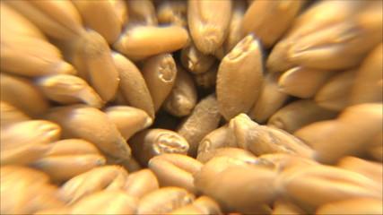 зерно на мельнице, крупный план