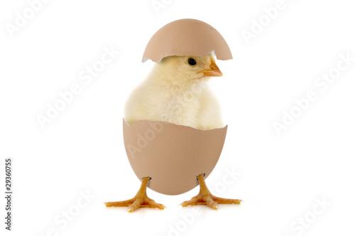 Leinwandbild Motiv Kleines Küken im Ei
