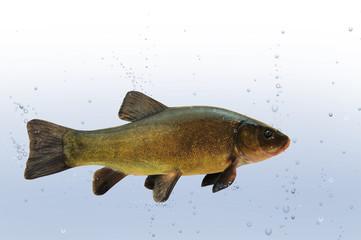 Fische 28