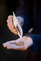 A man pouring seeds into his hand