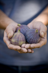 A man holding figs, close-up