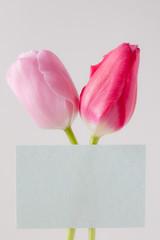 チューリップの花メッセージカード tulip