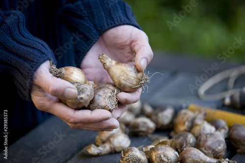 A man holding flower bulbs
