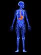 weibliche Anatomie - markierter Magen