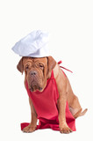 Dog with red apron and white chef hat on white background poster